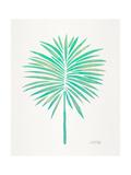 Seafoam Fan Palm