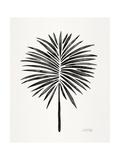 Black Fan Palm