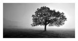Tree in Mist Reproduction d'art par PhotoINC Studio