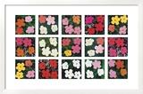 Flowers (various)  1964 - 1970