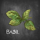 Basil on Chalkboard