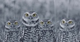 Pop of Color Burrowing Owl Family