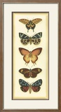 Small Butterfly Collector V