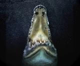 Les Dents de la mer Impression sur toile par Pedro Jarque