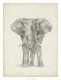 Elephant Sketch II