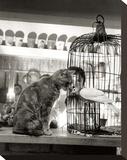 Child, Cat and Dove Tableau sur toile par Robert Doisneau