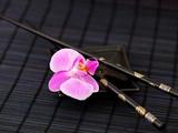 Zen Orchid