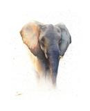 Elephant Watercolor