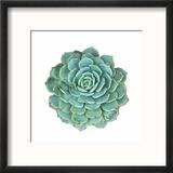 Miniature Succulent Plants Reproduction encadrée par Kenny001