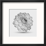 Abstract Floral Flower Dahlia Reproduction encadrée par Helga Pataki