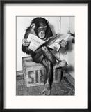 Chimpanzé lisant le journal Reproduction encadrée par Bettmann