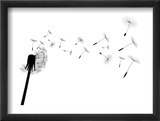 Blow Dandelion Reproduction encadrée par Losw