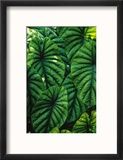 Green Tropical Leaves Reproduction encadrée par Darrell Gulin