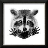 Hand Drawn Raccoon Reproduction encadrée par LViktoria
