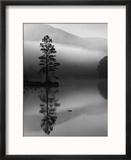 Scots Pine Tree Reflected in Lake at Dawn, Loch an Eilean, Scotland, UK Reproduction encadrée par Pete Cairns