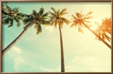 Vintage Nature Photo of Coconut Palm Tree in Seaside Tropical Coast Reproduction encadrée par Jakkapan