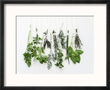 Various Fresh Herbs Hanging Up