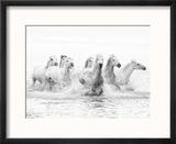 White Horses of Camargue Running Through the Water, Camargue, France Reproduction encadrée par Nadia Isakova
