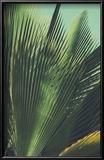 Abstrac, Retro Toned Etxotic Background. Reproduction encadrée par Sk901