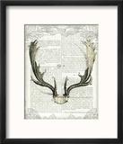 Regal Antlers on Newsprint II Reproduction encadrée par Sue Schlabach