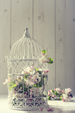 Bird Cage Filled with Apple Tree Blossom with Vintage Effect