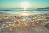 Starfish and Shells on the Beach at Sunrise Papier Photo par Deyan Georgiev