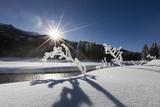 Snow Laden Branches Loom Like Statues in a Frozen Sculpture Garden