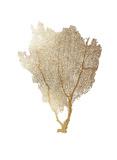 Gold Foil Sea Fan I Reproduction d'art par Vision Studio