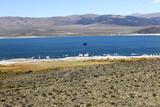 View of Mono Lake in California  USA