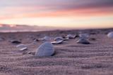 Shells Adorn the Sandly Shoreline of Pea Island National Wildlife Refuge