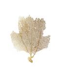 Gold Foil Sea Fan II Reproduction d'art par Vision Studio