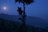 The Himalaya Mountains Loom Behind a Tree