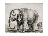 Elefant 1641