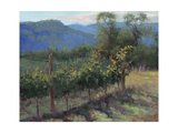 Vineyard On The Hill