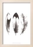 Watercolor Feathers II