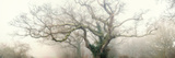 panoramic octopus ghost oak Papier Photo par Phillipe Manguin