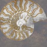 Le Nautilus I Reproduction d'art par Mark Chandon