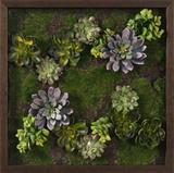 *Exclusive* Faux Succulent Lavender Mini Garden III *