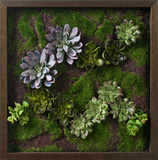 *Exclusive* Faux Succulent Lavender Mini Garden II *