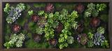 *Exclusive* Burgundy Lavender Succulent Garden