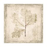 Stone Leaf III