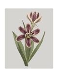 Floral Gems III