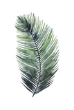Untethered Palm VII I