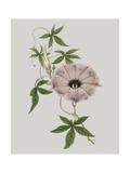 Floral Gems VI