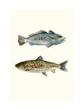 Fish Grouping 1