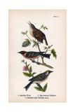 Vintage Birds: Wrens and Warblers  Plate 73