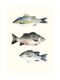 Fish Grouping 2