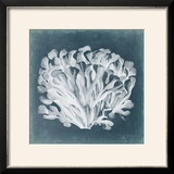 Azure Coral III