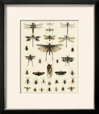 Dragonfly Display