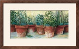 Potted Herbs II